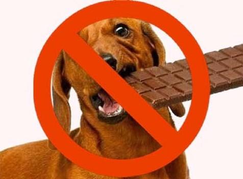 δηλητηριαση από σοκολάτα
