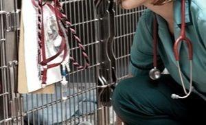 κτηνιατρική κλινική - νοσηλεία