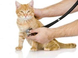 Οι πιο κοινές παθήσεις στην γατα