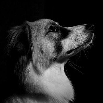 dog-1-min