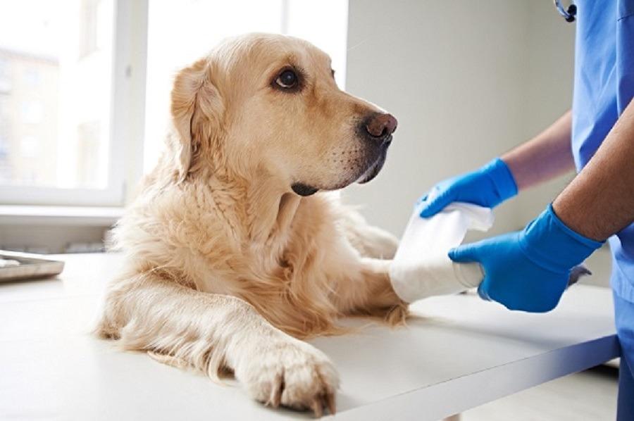 Κτηνιατρικές υπηρεσίες - κλινικη ζωων