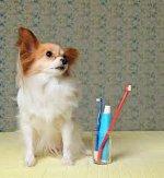 Περιοδοντίτιδα σκυλου και γατας