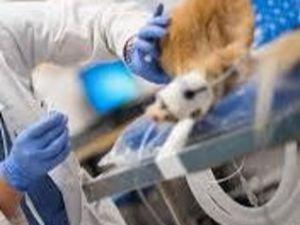 κτηνιατρική κλινική - εντατική