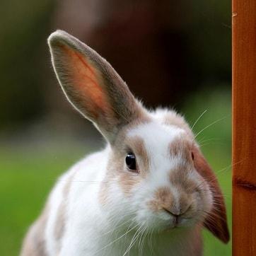 rabbit1-1-min